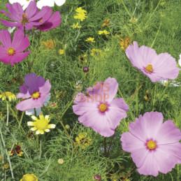 """Mélange fleuri """"Prairie..."""