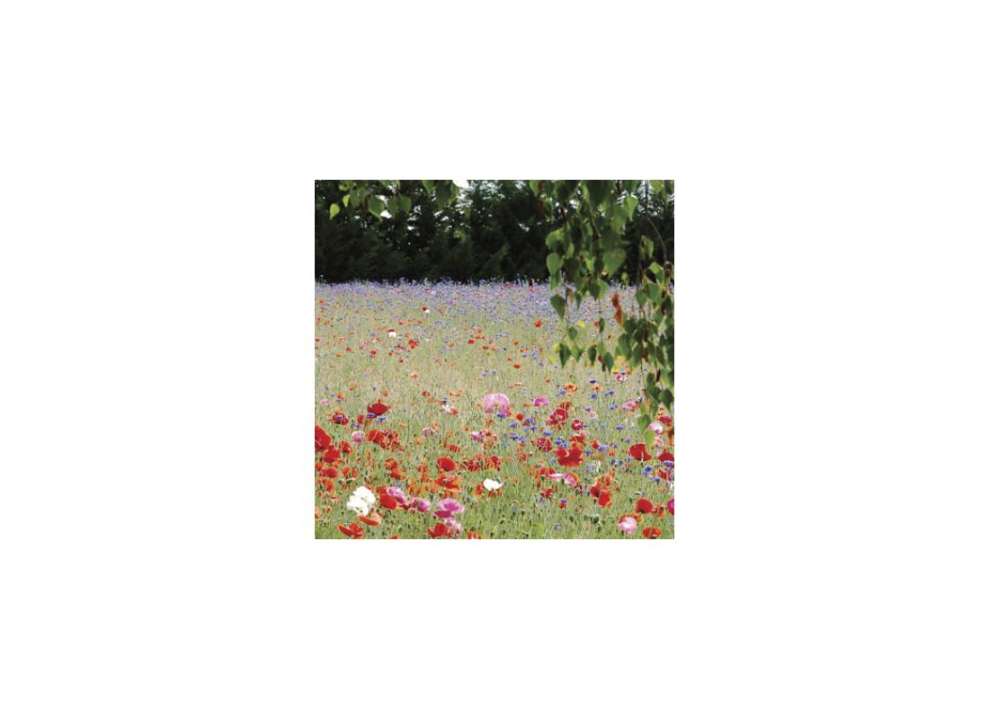 Mélanges fleuris de toutes marques - MSSHOP