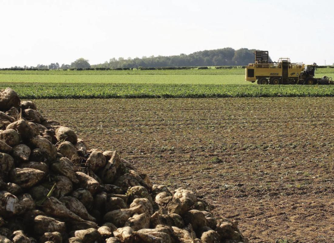 Récolte patatière et betteravière - MSSHOP